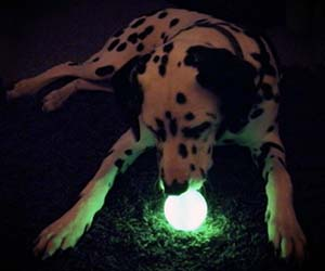 Glow Ball For Dogs