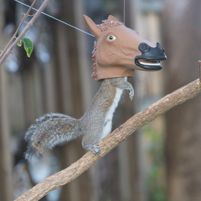 Horse Head Squirrel Feeder Gifts For Men