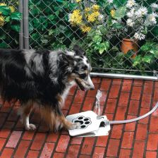 Dog Paw Fountain